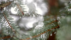 Beautiful fir-tree in snow in winter and falling snow Stock Footage