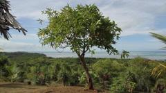 Southern Coastline of Palau Stock Footage