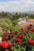 Stock Photo of Red roses on a background a settlement.