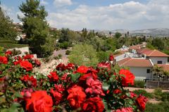 Red roses on a background a settlement. - stock photo