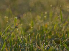 Blurred Grass With dew Water Drops. HDR RAW Shot With Motorized Slider. Stock Footage