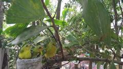 Birds feeding at back yard Stock Footage