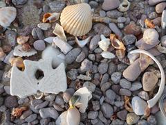 Sea shells and sand dollar on beach - stock photo