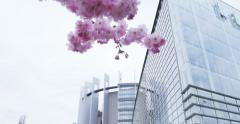 Sakura and Parliament building Stock Footage