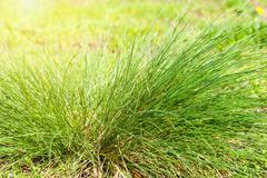 Green grass on a glade in sun beams Stock Photos