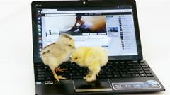Cute chicks fun with laptop, studio Stock Footage