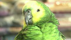Green Parrot in a Bird Shop-003 Stock Footage