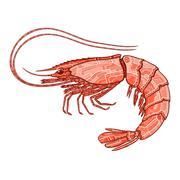 Decorative isolated shrimp Stock Illustration