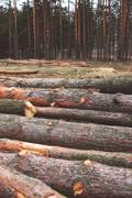 Environment, nature and deforestation forest concept - felling of trees in th - stock photo