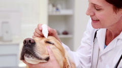 Veterinarian examining a cute dog Stock Footage