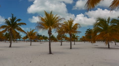 Time Lapse Palm trees at the Sirena beach at Cayo Largo Stock Footage