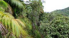 Topography of the Vallee de Mai Nature Reserve Stock Footage