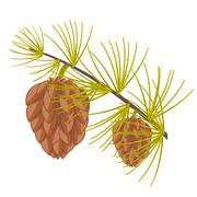 Branch of the conifer Stock Illustration