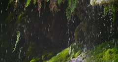 Close up rain drops falling tranquil loop-able nature background Stock Footage