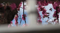 Pretty blossoms through a metal gate Stock Footage