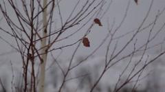 Frozen tree Stock Footage