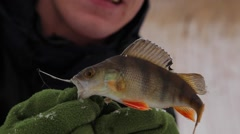 Caught perch Stock Footage
