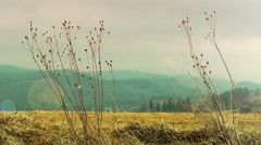 Dry Grass Sways in the Wind Stock Footage
