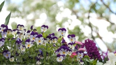 Pretty flowers in springtime Stock Footage