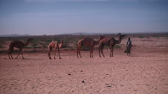 Camels led by herdsman. Africa, Stock Footage