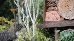 Cat hunting wild bees on insect hotel. Stock Footage