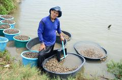 Stock Photo of Thai people aquaculture cockle farm and catching for sale