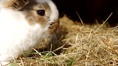 Rabbits in the cage Stock Footage