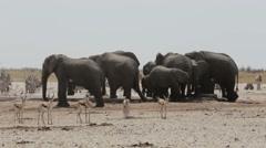 Crowded waterhole with Elephants, zebras, springbok and orix Stock Footage