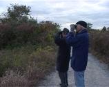 Stock Video Footage of Birds watching