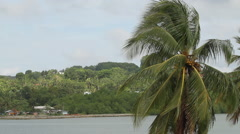 Palm Trees in the Hot Sun PALAU Stock Footage