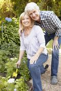 Senior couple gardening Stock Photos