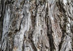 Dry tree bark texture background Stock Photos