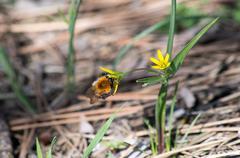 Bumblebee // Bumble bee Stock Photos