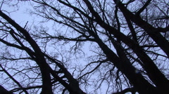 Turning beneath bare tree branches against winter sky - stock footage