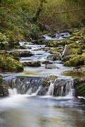 Stock Photo of Little waterfalls in a mountain river in the High Fens, Ardennes, Belgium, lo