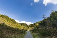 Stock Photo of Footpath in the Bayehon Valley, High Fens, Ardennes, Belgium