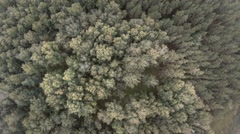 Aerial flight over beautiful evergreen forest Stock Footage