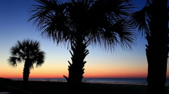 Palm Trees at beach silhouette at dawn - stock footage