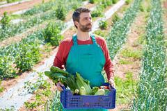 Farmer man harvesting vegetables in orchard - stock photo