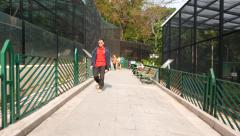Path in zoological garden in Hong Kong park. Stock Footage