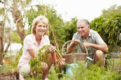Stock Photo of Senior Couple Working On Allotment Together