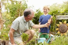Grandfather And Grandson Working On Allotment Stock Photos