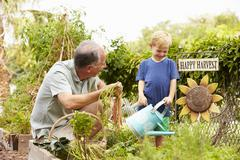 Grandfather And Grandson Working On Allotment - stock photo