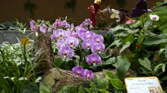 Light violet orchid flowers in botanic garden Stock Footage