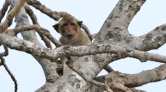 Cute Monkey Eating Stock Footage