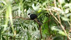 Bird with long tail sitting on the branch in leaves Stock Footage