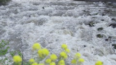 High point of view of lush river in slow motion Stock Footage