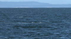 Gray Whale, Whale, Baleen Whale, 4K Stock Footage