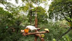 Bali myna eating on the rotating feeding rack. Stock Footage