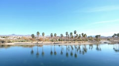 Palm Trees Reflecting in Water Colorado River Stock Footage
